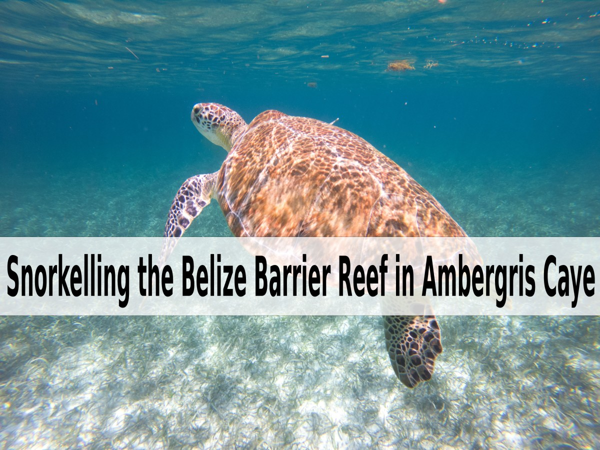 Snorkelling the Belize Barrier Reef in Ambergris Caye